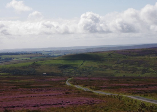 heather moor land, feldom ranges / cordilleras farm, yorkshire