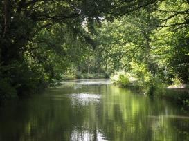 basingstoke canal