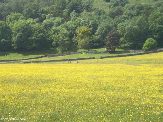 meadow near Buckden, Wharfedale