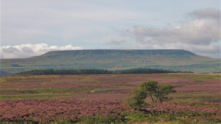Pen Hill, Wensleydale from Whipperdale Bank