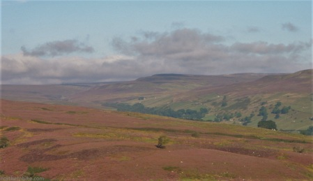 Cogden Moor and Calver Hill, Swaledale